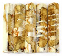 Willow Burl Hybrid Pen Blanks #16-20DD